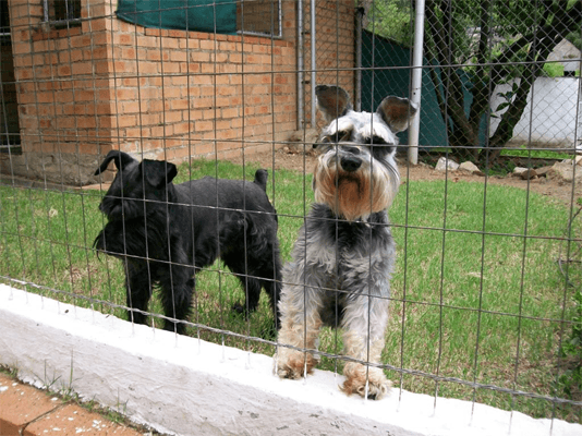 Bryanston Ferndale Kennels and Cattery